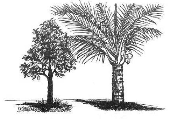 Menerapkan Prinsip Gambar Sketsa Dan Illustrasi Maunatul Zulfa